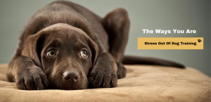 The Ways You Are Stress Out Of Dog Training